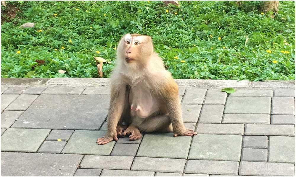 Смотрим на мартышек на горе обезьян
