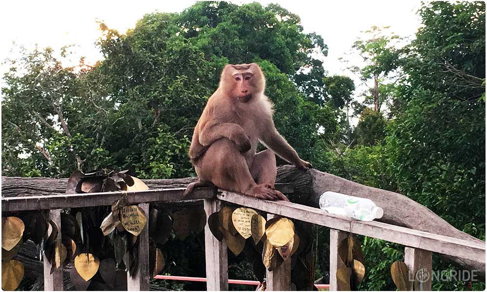 Смотрим на обезьян у Биг Будды