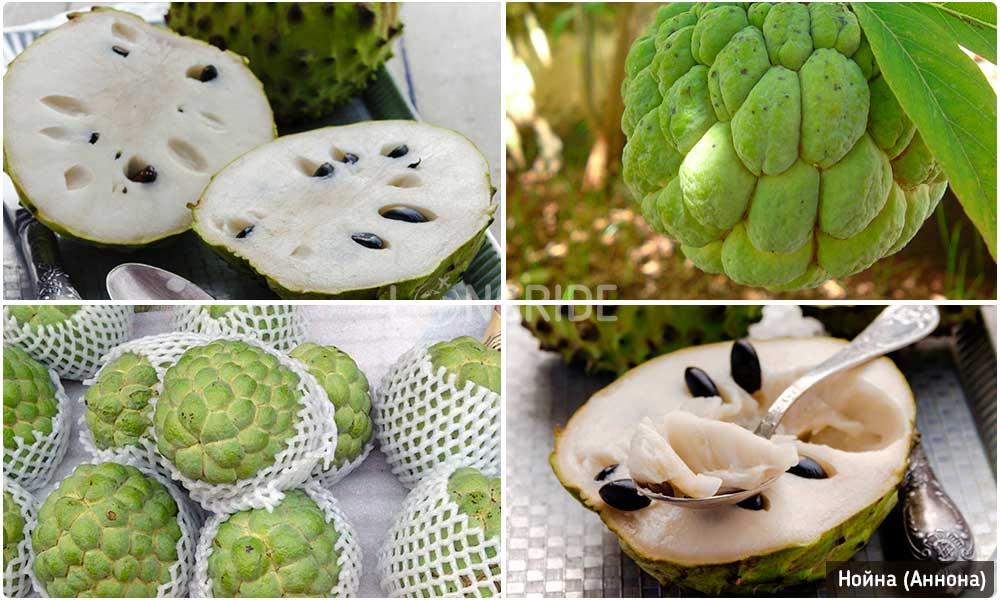 Нойна - экзотическое яблоко Таиланда