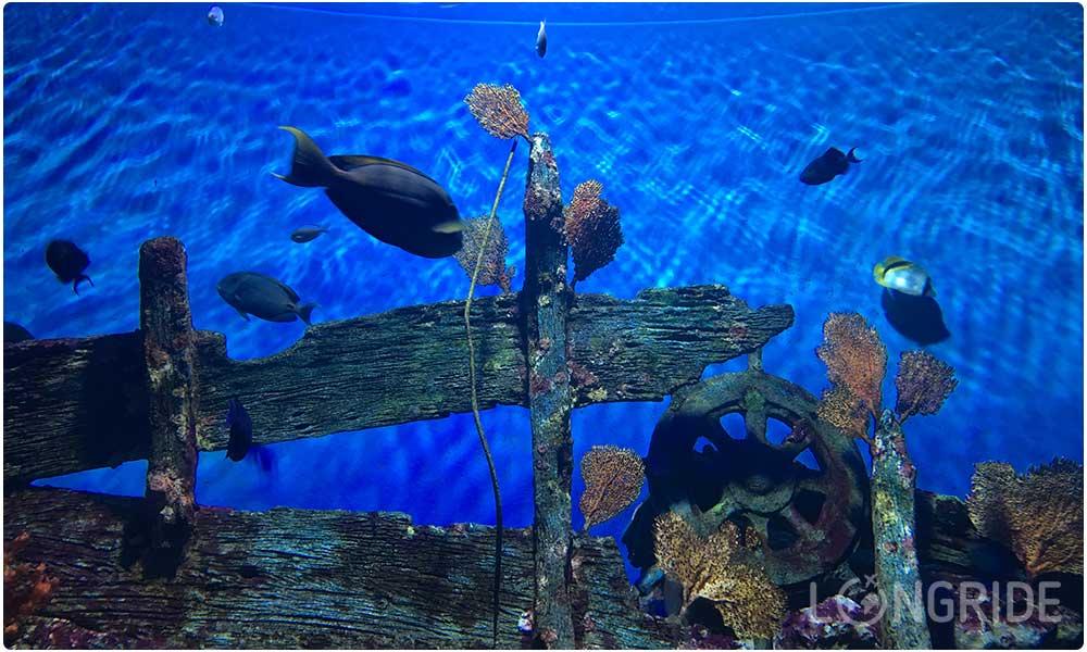 Стоимость океанариума в Бангкоке на двоих в 2019-м году