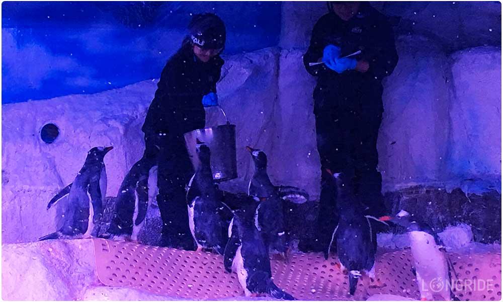 Пингвины в Океанариуме Бангкока